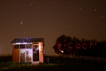 The pastured chickens of A-Coop put themselves to bed every evening by voluntarily sleeping in the protected coop.