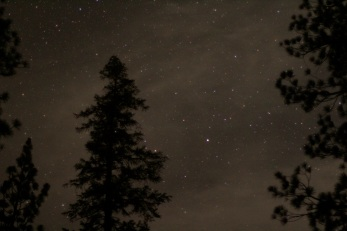 The night sky in Sequoia National Park.
