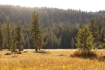 Beautiful sunlight floods this golden meadow in Sequoia National Forest.