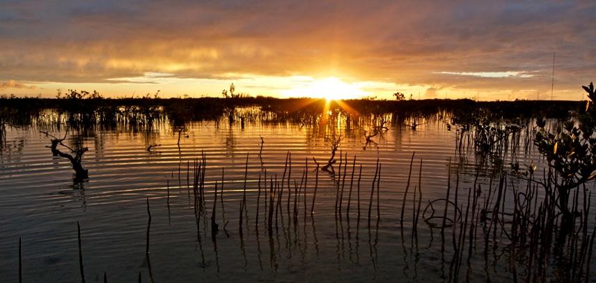 Mangrove roots seeking oxygen in the marsh on Cudjoe Key, FL.
