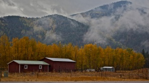 Fall colors in Montana.