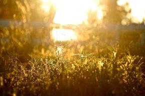 Sunlit Pasture at Apricot Lane Farms